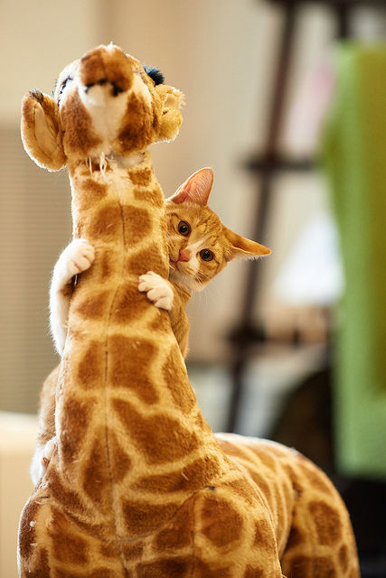 可愛い猫画像ブログ(1191)