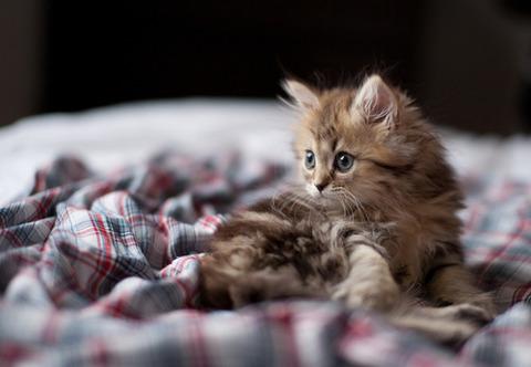 可愛い猫画像ブログ(1180)