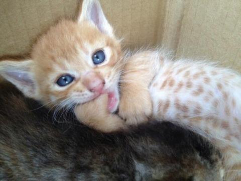可愛い猫画像ブログ(1242)