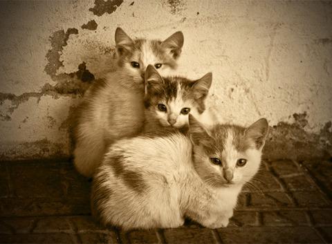 可愛い猫画像ブログ(1225)
