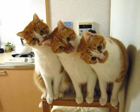 可愛い猫画像ブログ(1203)