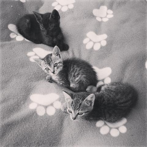 可愛い猫画像ブログ(1069)