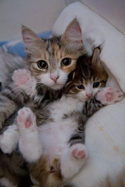 可愛い猫画像ブログ(1355)