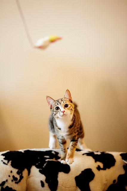 可愛い猫画像ブログ(1268)