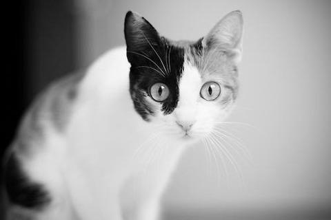 可愛い猫画像ブログ(1275)