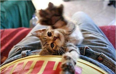 可愛い猫画像ブログ(759)