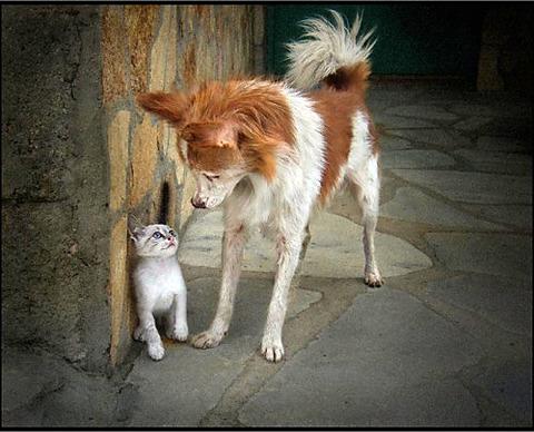 可愛い猫画像ブログ(1307)