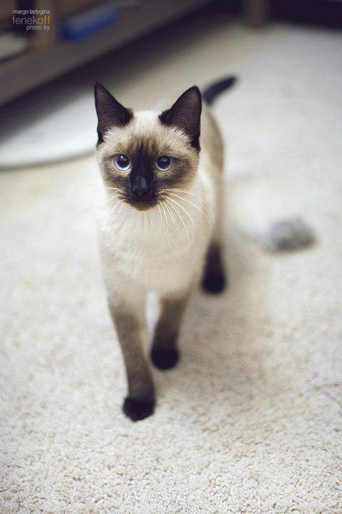 可愛い猫画像ブログ(1028)