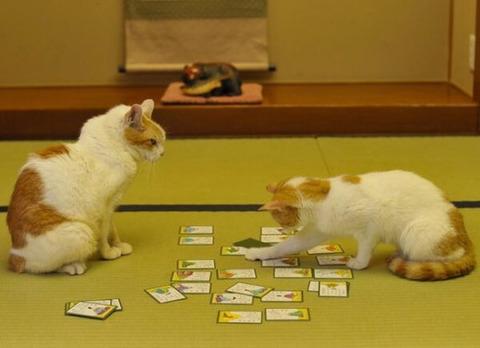 可愛い猫画像ブログ(1348)