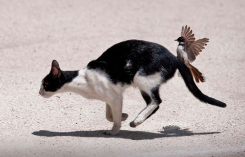 可愛い猫画像ブログ(1356)