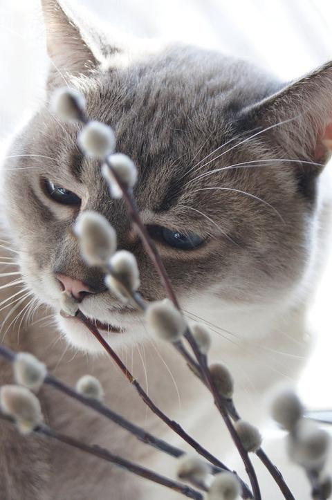 可愛い猫画像ブログ(1347)