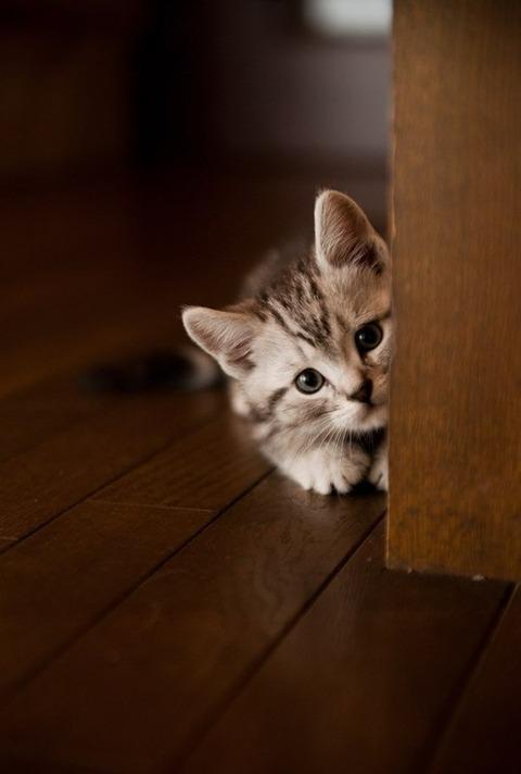 可愛い猫画像ブログ(1295)