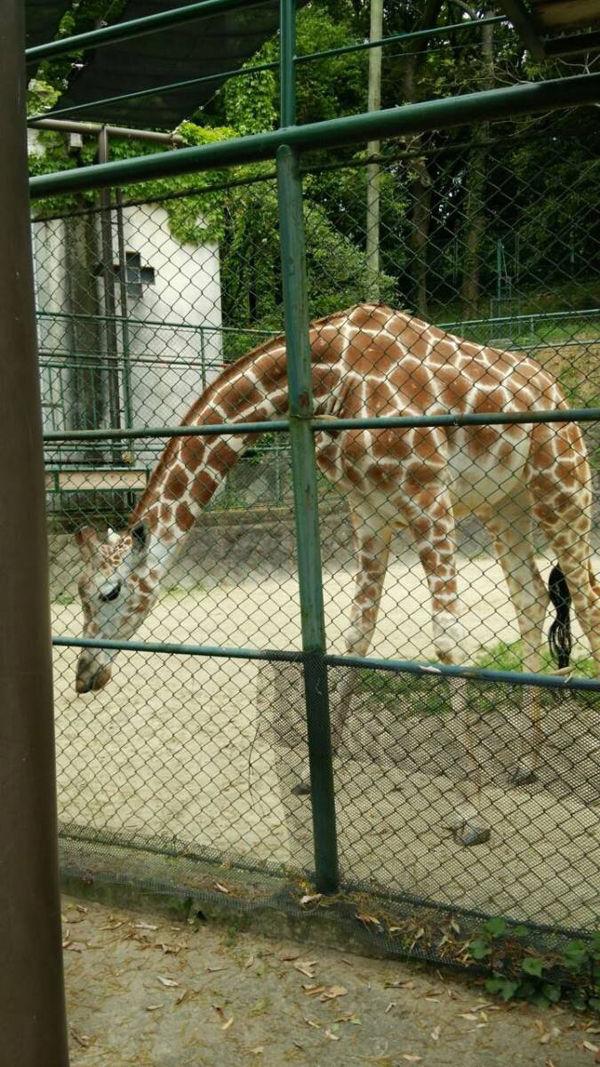 福岡市動物園1
