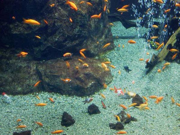 足立区生物園2