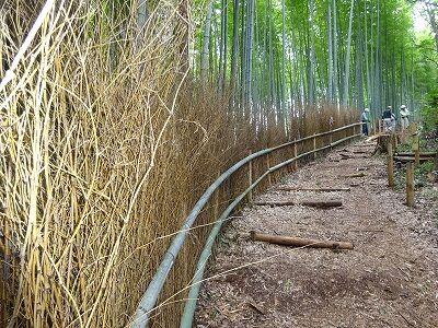 竹林の竹垣作業