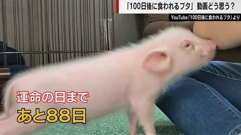 100日後に食われる豚丸焼き (5)