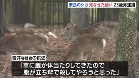 奈良のシカ死なせた (3)
