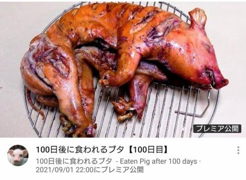 100日後に食われる豚丸焼き (1)