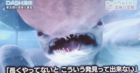 tokio 古代サメ捕獲 (3)