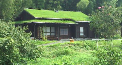 一人農業 渡辺 台風被害 (4)