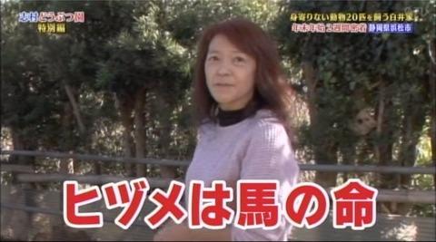 志村どうぶつ園白井家 (3)