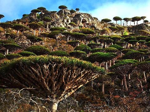 Socotra0008