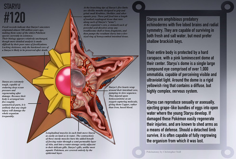 staryu_anatomy__pokedex_entry_by_christopher_stoll-dagpdwk