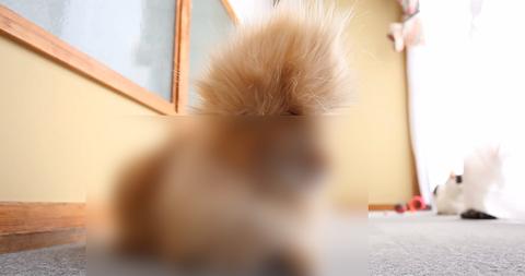 モヒカン猫
