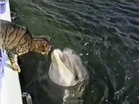 イルカと猫