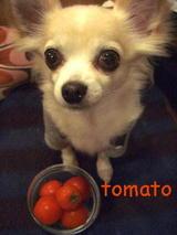 トマトミニ