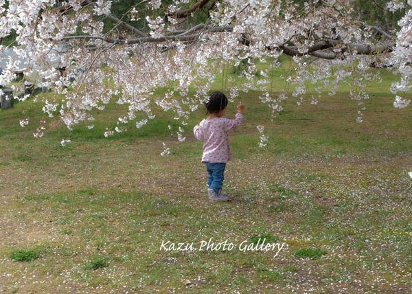 桜舞い散る中で♪