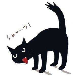 あちこちの家をたらい回しにされ、人間不信になった猫が我が家にやってきた