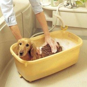 学者「毎日体を洗うのは健康によくない。週2回で十分」