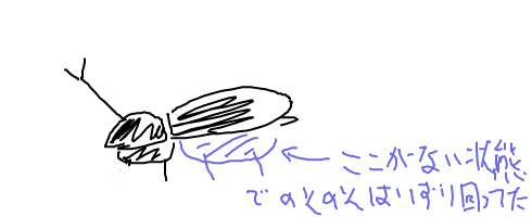 鳥に食べられたカブトムシ