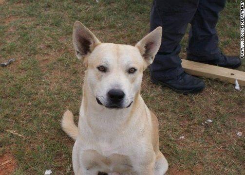 逃走の容疑者の飼い犬、警官を隠れ場所に導く「手柄」