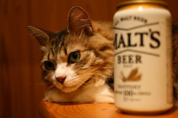 【ネコ】ニャッハー! われわれのオアシス(ニャバクラ)が見つかった!