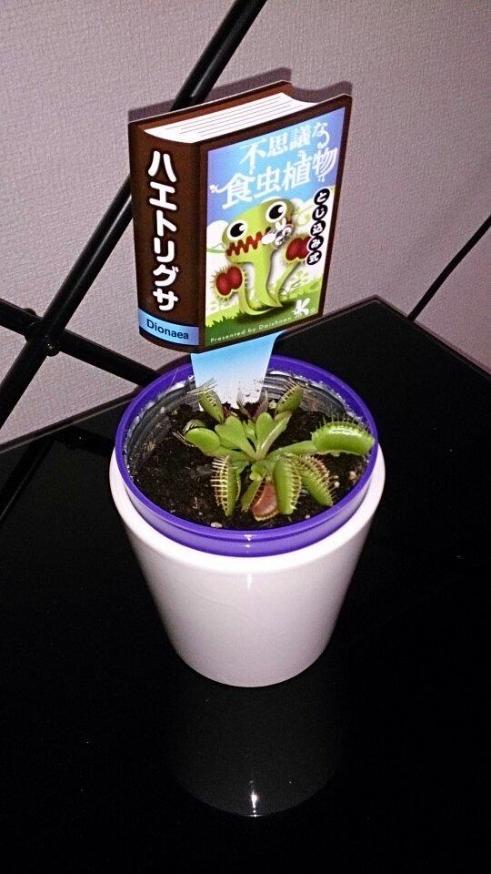 食虫植物買っちったwwwwww