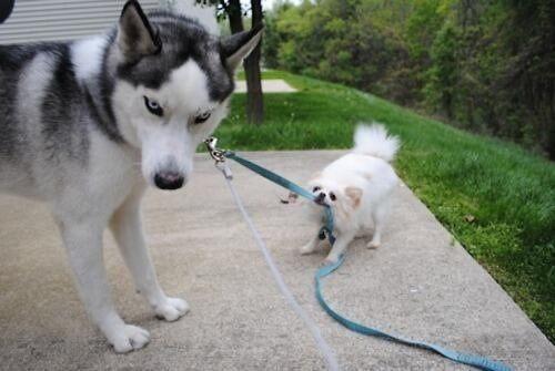 チラ見する犬