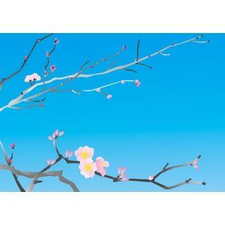 今でも桜を見ると耳を傾けてしまう、あの桜の声が聞きたくて