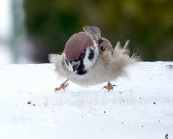 鳥さんかわいい鳥さん