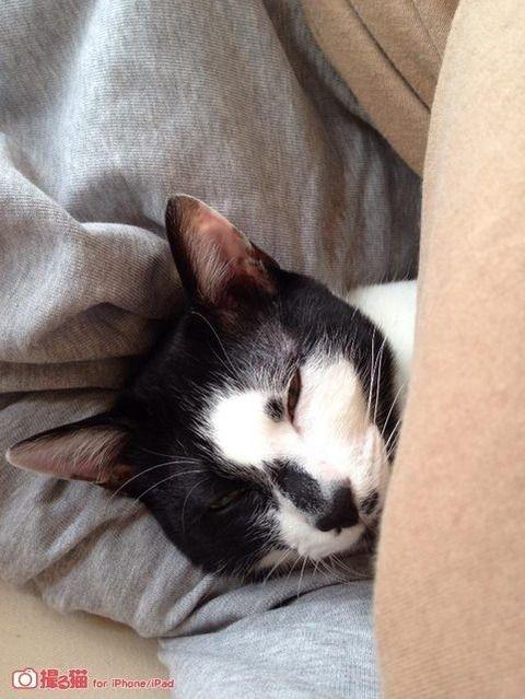 猫が一緒に寝せれ!って布団に入って来たから、まだ起きられない(´・ω・`)