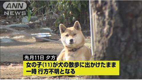 行方不明の犬