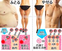 糖の消費・脂肪の蓄積・脂肪の燃焼