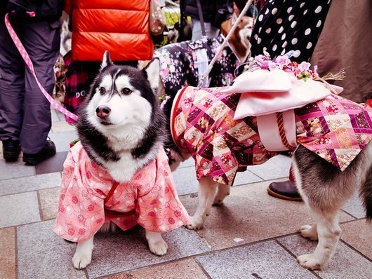 crazy-fashion-of-dogs-in-japan1