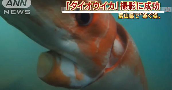 big-squid4_2619441a