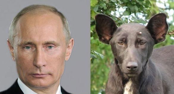 PutinDog (1)