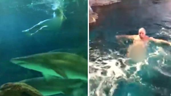 101618_man_swims_naked_sharks_web_0