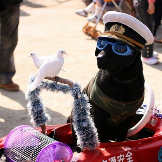 crazy-fashion-of-dogs-in-japan20