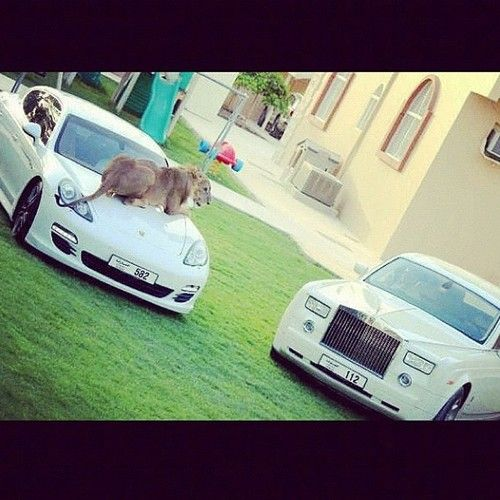 phantom-panamera-lion