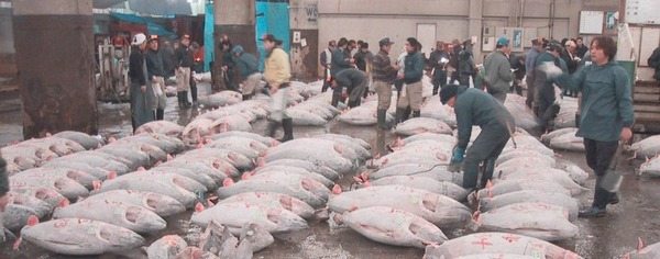 Tuna-Market